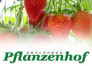 pflanzenhof-online.de